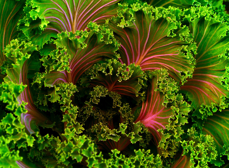 Nourriture vivante naturabsolu - Cuisine crue et vivante ...